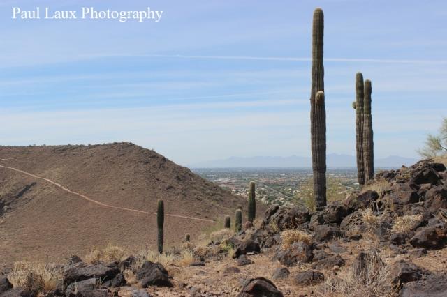 Cactus over mountain